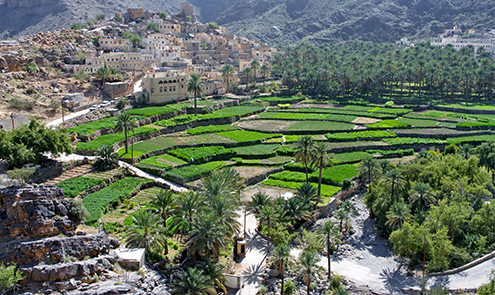 202 thousand feddans is the total cultivated area in the Sultanate